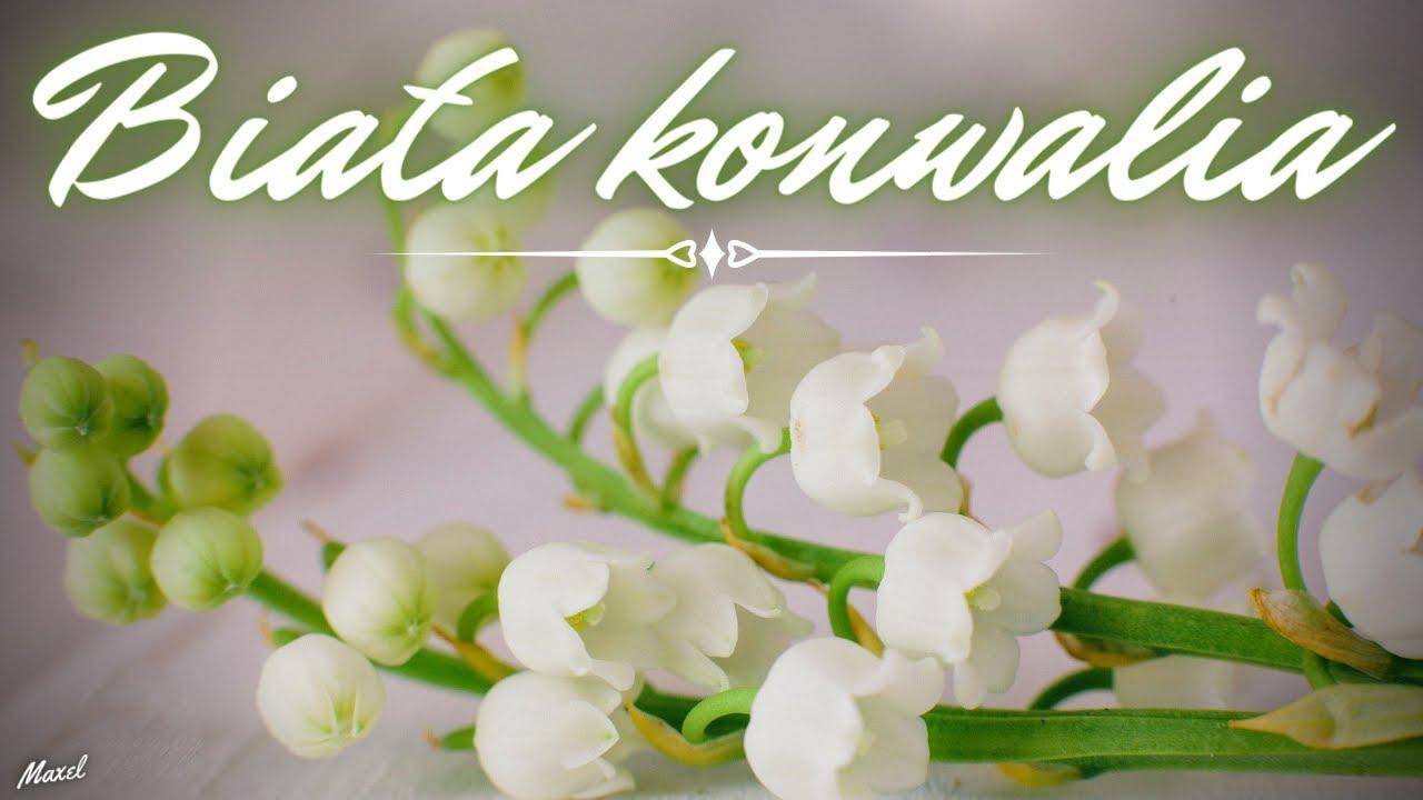 Arek Kopaczewski & Loki - Biała konwalia>                                     </a>                                     </div>                                     <div class=